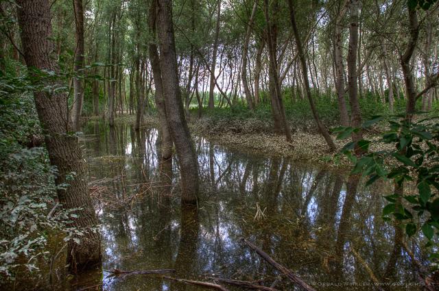 Donau Everglades