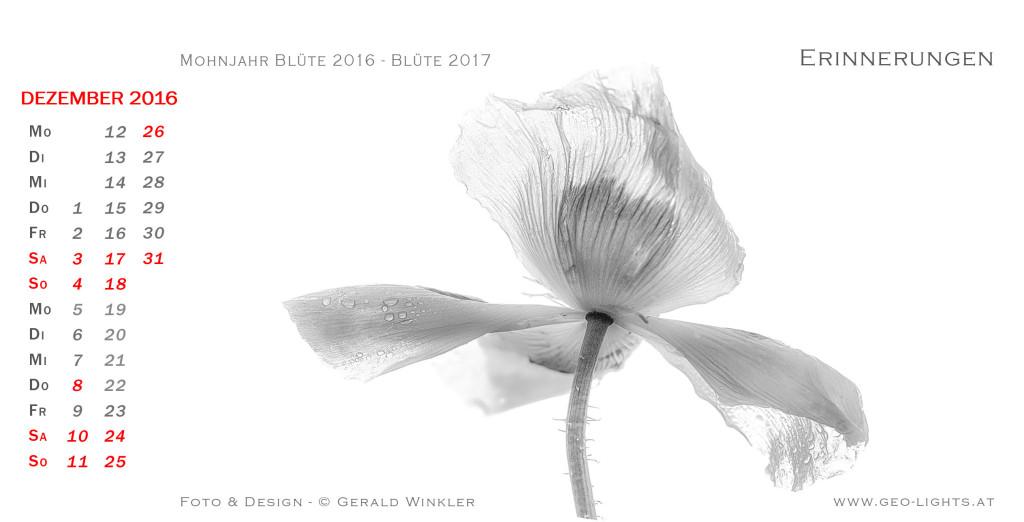 1612-0B-Kalender-214x109-die-rose